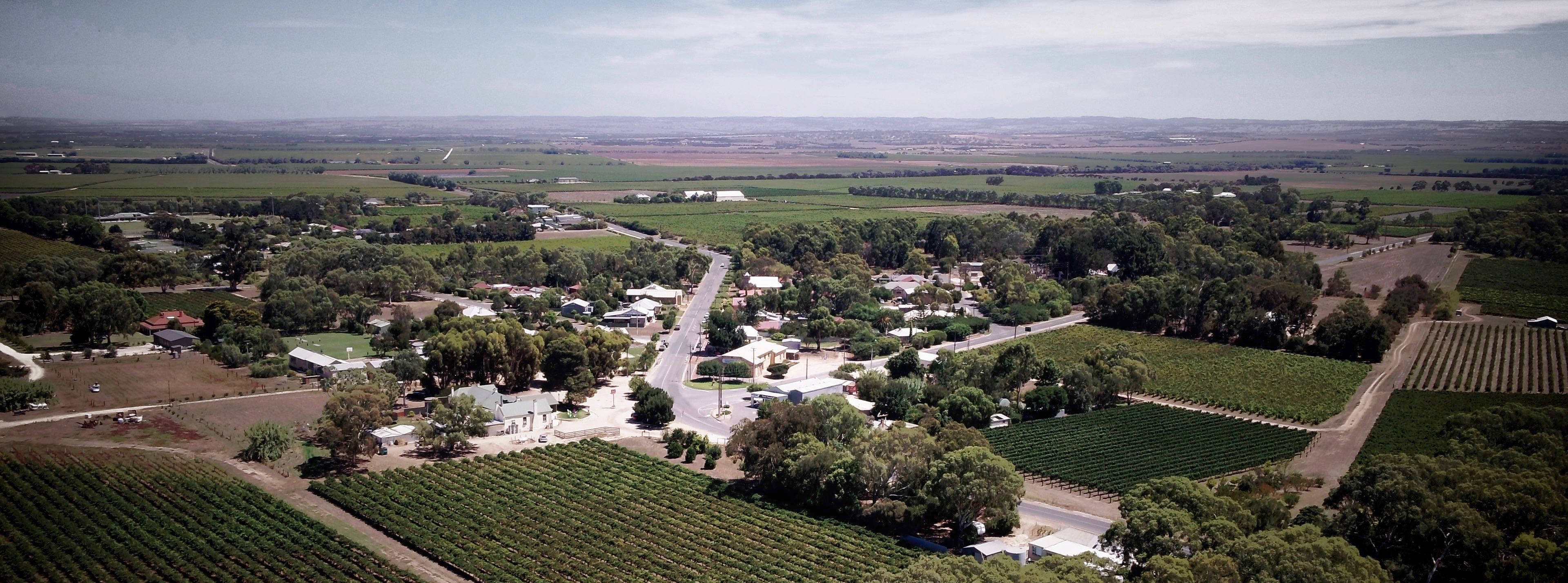 Langhorne Creek Wine Videos